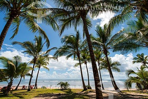 Coqueiros na Praia de Algodões  - Maraú - Bahia (BA) - Brasil