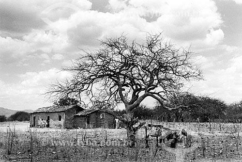 Árvore seca no sertão  - Canudos - Bahia (BA) - Brasil
