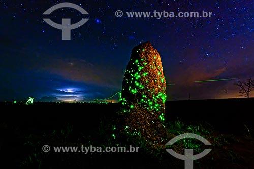 Cupinzeiro com bioluminescência - larvas do vaga-lume Pyrearinus termitilluminans - em noites úmidas, mornas, sem vento e sem lua, as larvas aparecem do lado de fora dos túneis, acesas, atraindo pequenos insetos para predá-los  - Mineiros - Goiás (GO) - Brasil