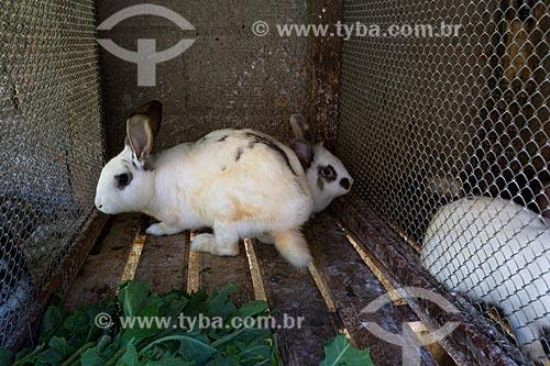 Criação de coelhos no Sítio São João (antiga Fazenda Bonfim)  - Petrópolis - Rio de Janeiro (RJ) - Brasil