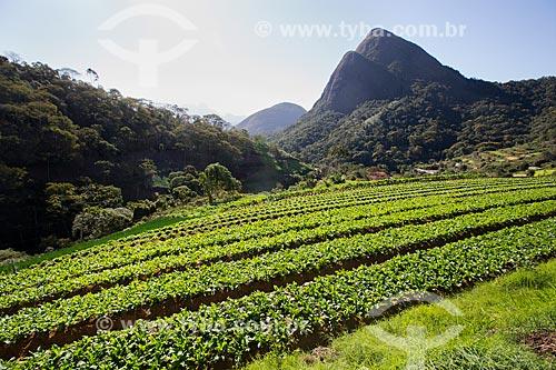 Plantação de rúcula próximo ao Parque Nacional da Serra dos Órgãos  - Petrópolis - Rio de Janeiro (RJ) - Brasil