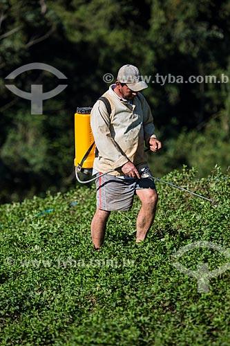 Homem aplicando o inseticida folidol em plantação de hortelã sem equipamento de proteção  - Petrópolis - Rio de Janeiro (RJ) - Brasil