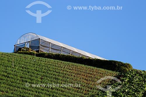 Plantação de cebolinha com estufa ao fundo  - Petrópolis - Rio de Janeiro (RJ) - Brasil