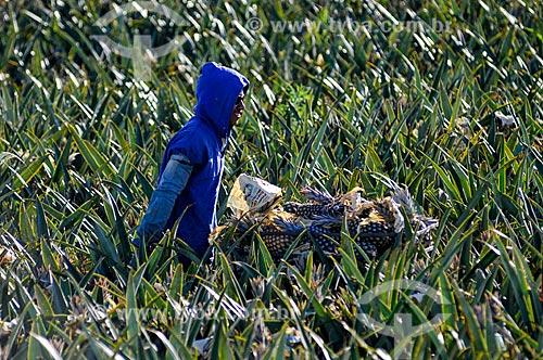 Trabalhador rural colhendo abacaxi tipo pérola  - Frutal - Minas Gerais (MG) - Brasil