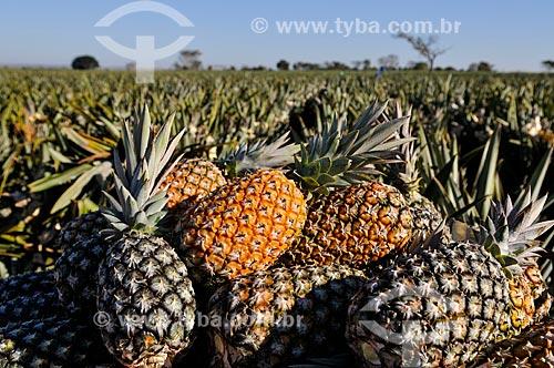 Plantação de Abacaxi tipo pérola  - Frutal - Minas Gerais (MG) - Brasil