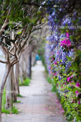 Calçada e cerca viva florida  - Canela - Rio Grande do Sul (RS) - Brasil