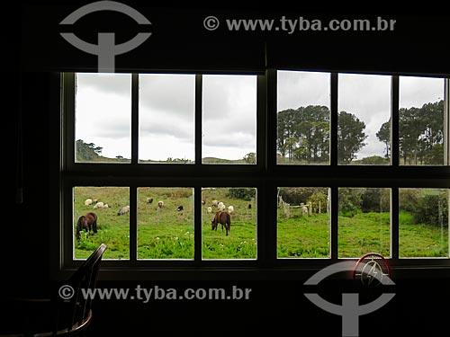 Vista de animais pastando a partir de dentro de casa de campo  - São Francisco de Paula - Rio Grande do Sul (RS) - Brasil