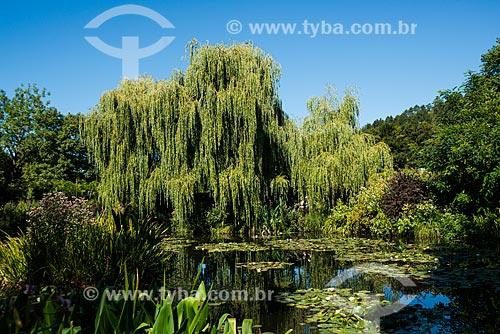 Salgueiro-chorão (Salix babylonica) no lago do Jardim de Claude Monet - Jardim das Nymphéas  - Giverny - Eure - França