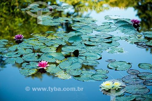 Flores da Vitória-régia (Victoria amazonica) no lago do Jardim de Claude Monet - Jardim das Nymphéas  - Giverny - Eure - França