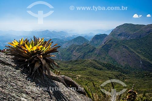 Bromélia na trilha do Morro do Açu - Parque Nacional da Serra dos Órgãos  - Petrópolis - Rio de Janeiro (RJ) - Brasil