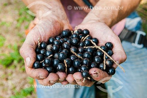 Homem segurando frutos do içara (Euterpe edulis Martius) - também conhecida como juçara, jiçara ou palmito-juçara - na Área de Proteção Ambiental da Serrinha do Alambari  - Resende - Rio de Janeiro (RJ) - Brasil