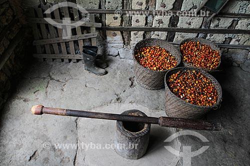 Cestos de palha com frutos do Guaraná (Paullinia cupana) colhidos pelos ribeirinhos  - Maués - Amazonas (AM) - Brasil