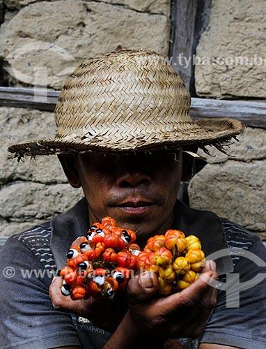 Ribeirinho segurando cachos de guaraná (Paullinia cupana)  - Maués - Amazonas (AM) - Brasil