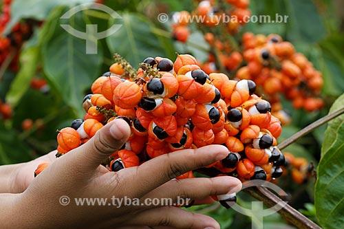 Detalhe de menina segurando os frutos do Guaraná (Paullinia cupana)  - Maués - Amazonas (AM) - Brasil