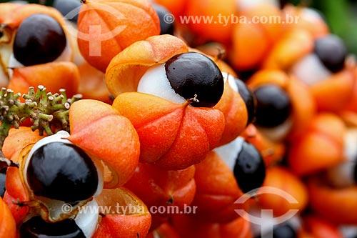 Detalhe de frutos do Guaraná (Paullinia cupana)  - Maués - Amazonas (AM) - Brasil