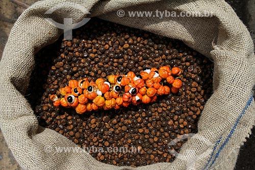 Sementes torradas do Guaraná (Paullinia cupana) com cacho do fruto colhido pelos ribeirinhos  - Maués - Amazonas (AM) - Brasil