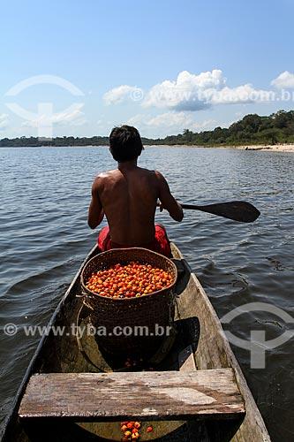 Homem ribeirinho levando cesto de palha com frutos do Guaraná (Paullinia cupana) na canoa - Rio Maués-Açu  - Maués - Amazonas (AM) - Brasil