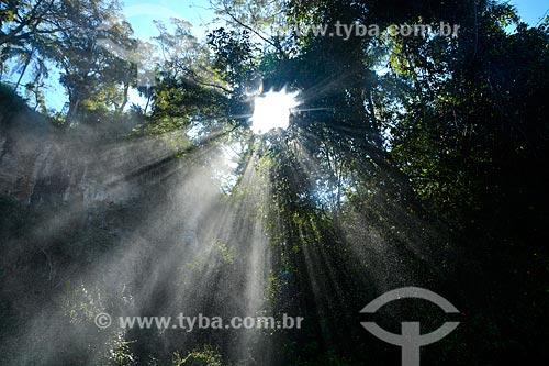 Raios de luz entre as árvores do Parque Nacional do Iguaçu  - Puerto Iguazú - Província de Misiones - Argentina