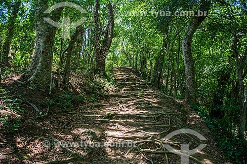 Trilha entre a Vila de Abraão e a Enseada de Palmas  - Angra dos Reis - Rio de Janeiro (RJ) - Brasil