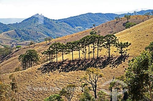 Vista de Araucárias (Araucaria angustifolia) a partir da rodovia BR-354  - Itamonte - Minas Gerais (MG) - Brasil