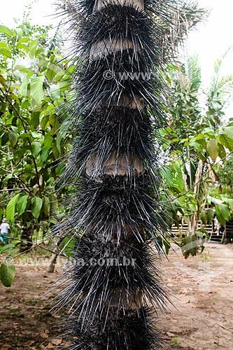Detalhe do tronco do Tucumã (Astrocaryum aculeatum) - também conhecida como Acaiúra ou Tucum - próximo à Manaus  - Manaus - Amazonas (AM) - Brasil