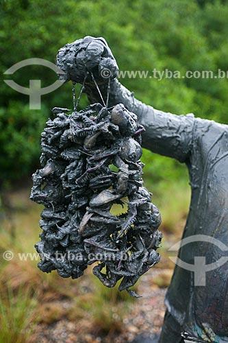 Caranguejo-uçá (Ucides cordatus) à venda   - Bragança - Pará (PA) - Brasil