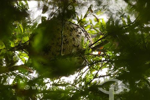 Ninho de marimbondo próximo ao Parque Nacional da Serra dos Órgãos  - Teresópolis - Rio de Janeiro (RJ) - Brasil