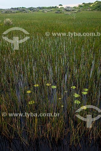 Vegetação em área alagada do Parque Nacional dos Lençóis Maranhenses  - Barreirinhas - Maranhão (MA) - Brasil