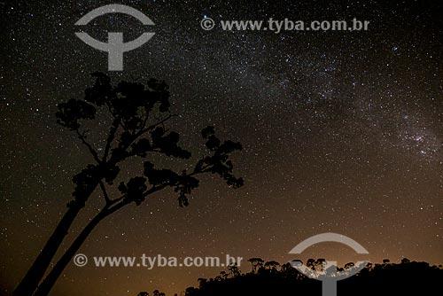 Galho de Jequitibá (Cariniana ianeirensis) com céu estrelado ao fundo  - Resende - Rio de Janeiro (RJ) - Brasil