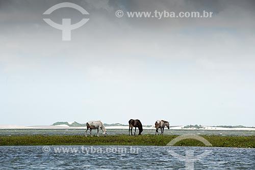 Cavalos na Lagoa do Santo Amaro  - Santo Amaro do Maranhão - Maranhão (MA) - Brasil