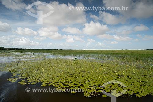 Vegetação na Lagoa do Santo Amaro  - Santo Amaro do Maranhão - Maranhão (MA) - Brasil