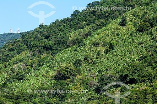 Plantação de bananas na Serra do Mendanha  - Rio de Janeiro - Rio de Janeiro (RJ) - Brasil