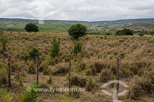 Vista da vegetação do cerrado  - Nova Olinda - Ceará (CE) - Brasil