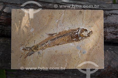 Fóssil de peixe encontrado no Geoparque Araripe em exposição no Museu de Paleontologia da Universidade Regional do Cariri  - Santana do Cariri - Ceará (CE) - Brasil