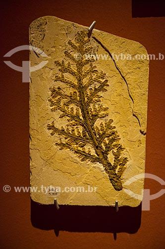 Formação fossilífera - Brachyphyllum obesum - em exposição no Museu de Paleontologia da Universidade Regional do Cariri  - Santana do Cariri - Ceará (CE) - Brasil