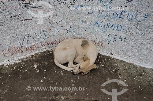 Detalhe de cachorro deitado na base da estátua de Padre Cícero na Colina do Horto  - Juazeiro do Norte - Ceará (CE) - Brasil