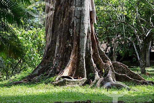Árvore-de-contas (Elaeocarpus angustifolius) - árvore endêmica da Índia, Austrália, Nova Guiné e caracterizada pelo fruto de cor azul - no Jardim Botânico do Rio de Janeiro  - Rio de Janeiro - Rio de Janeiro (RJ) - Brasil