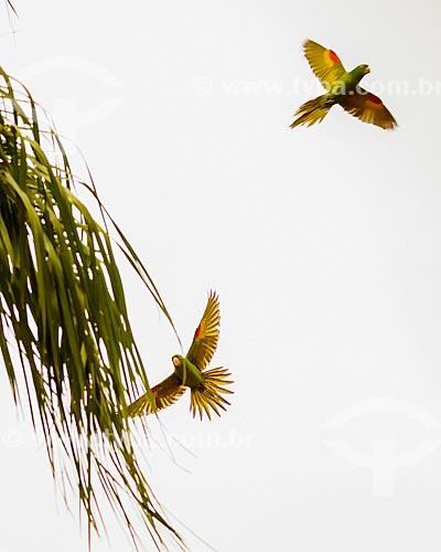 Maitacas próximo à cidade de Andrelândia  - Andrelândia - Minas Gerais (MG) - Brasil