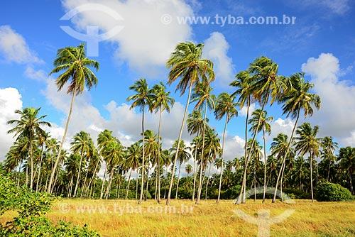 Coqueiros na orla da Praia do Patacho - Rota Ecológica de Alagoas  - Porto de Pedras - Alagoas (AL) - Brasil