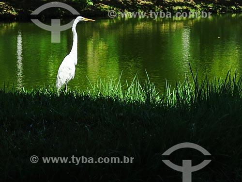 Garça-branca-grande (Ardea alba) às margens da lagoa na Praça Itália  - Porto Alegre - Rio Grande do Sul (RS) - Brasil