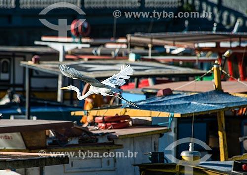 Garça-branca-grande (Ardea alba) voando no píer do Quadrado da Urca com os barcos ao fundo  - Rio de Janeiro - Rio de Janeiro (RJ) - Brasil