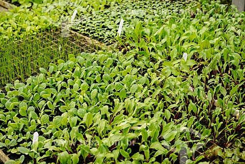 Estufa com mudas de alface, repolho, hortelã e cebolinha na fazenda Vale das Palmeiras  - Teresópolis - Rio de Janeiro (RJ) - Brasil