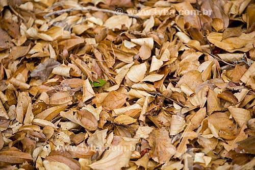 Folhas secas na caatinga  - Quixadá - Ceará (CE) - Brasil