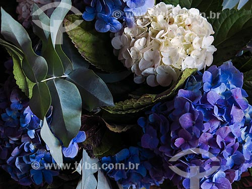 Arranjo de hortênsia (Hydrangea macrophylla)  - Canela - Rio Grande do Sul (RS) - Brasil