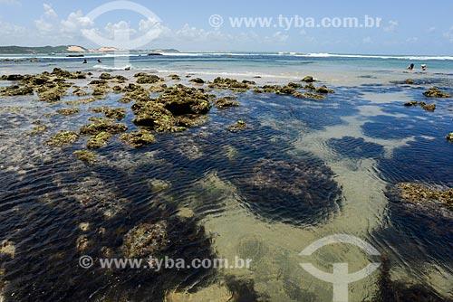 Detalhe dos carais na Baía dos Golfinhos  - Tibau do Sul - Rio Grande do Norte (RN) - Brasil