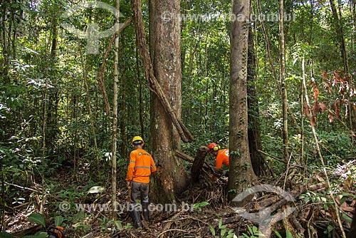 Técnicos do Instituto Floresta Tropical (IFT) preparando o corte da árvore no Centro de Manejo Florestal Roberto Bauch  - Paragominas - Pará (PA) - Brasil