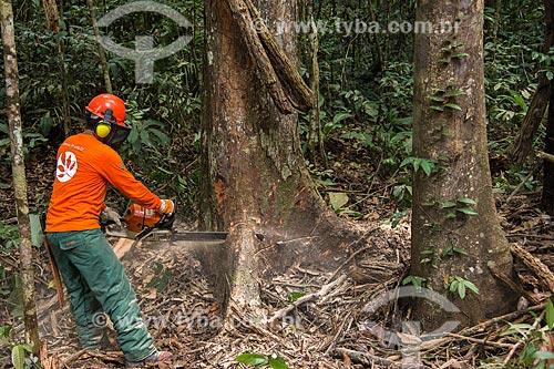 Técnico do Instituto Floresta Tropical (IFT) cortando árvore no Centro de Manejo Florestal Roberto Bauch  - Paragominas - Pará (PA) - Brasil