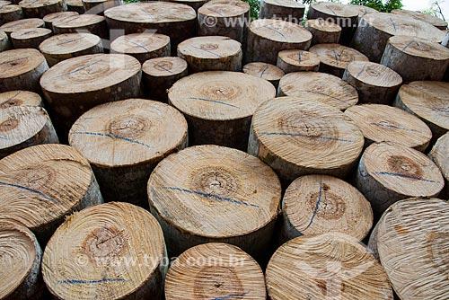 Detalhe de troncos de Paricá (Schizolobium parahyba var amazonicum)  - Paragominas - Pará (PA) - Brasil