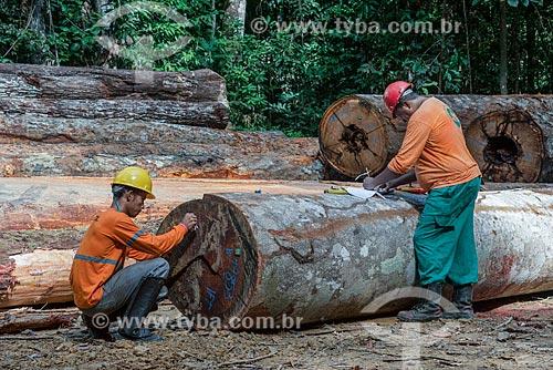 Técnicos colocando identificação em toras que irão para as serrarias  - Paragominas - Pará (PA) - Brasil