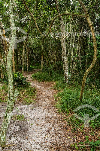 Trilha no Parque Municipal da Lagoa do Peri  - Florianópolis - Santa Catarina (SC) - Brasil